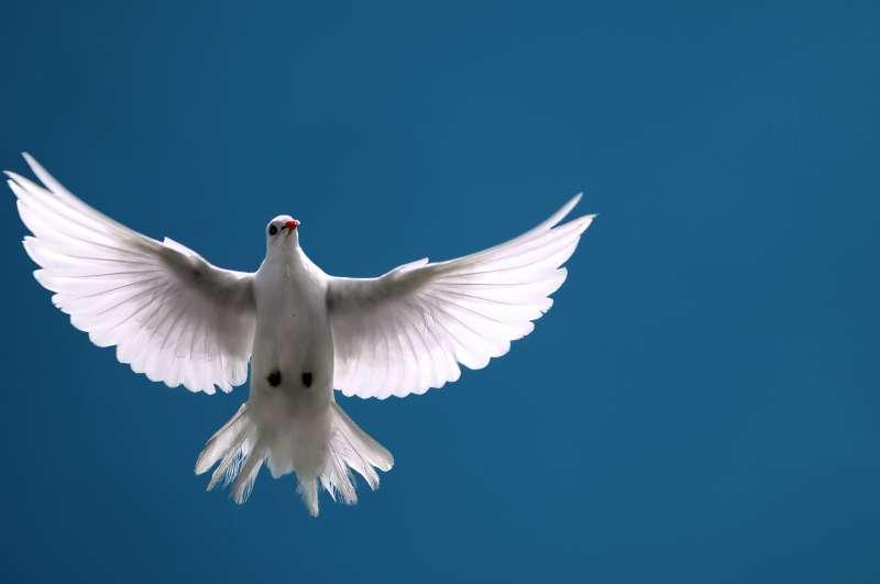 De Geest verheerlijkt Christus